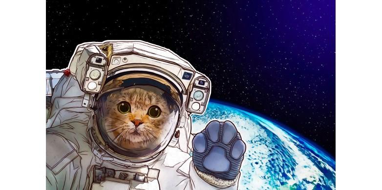 6 идей для подарка на День космонавтики